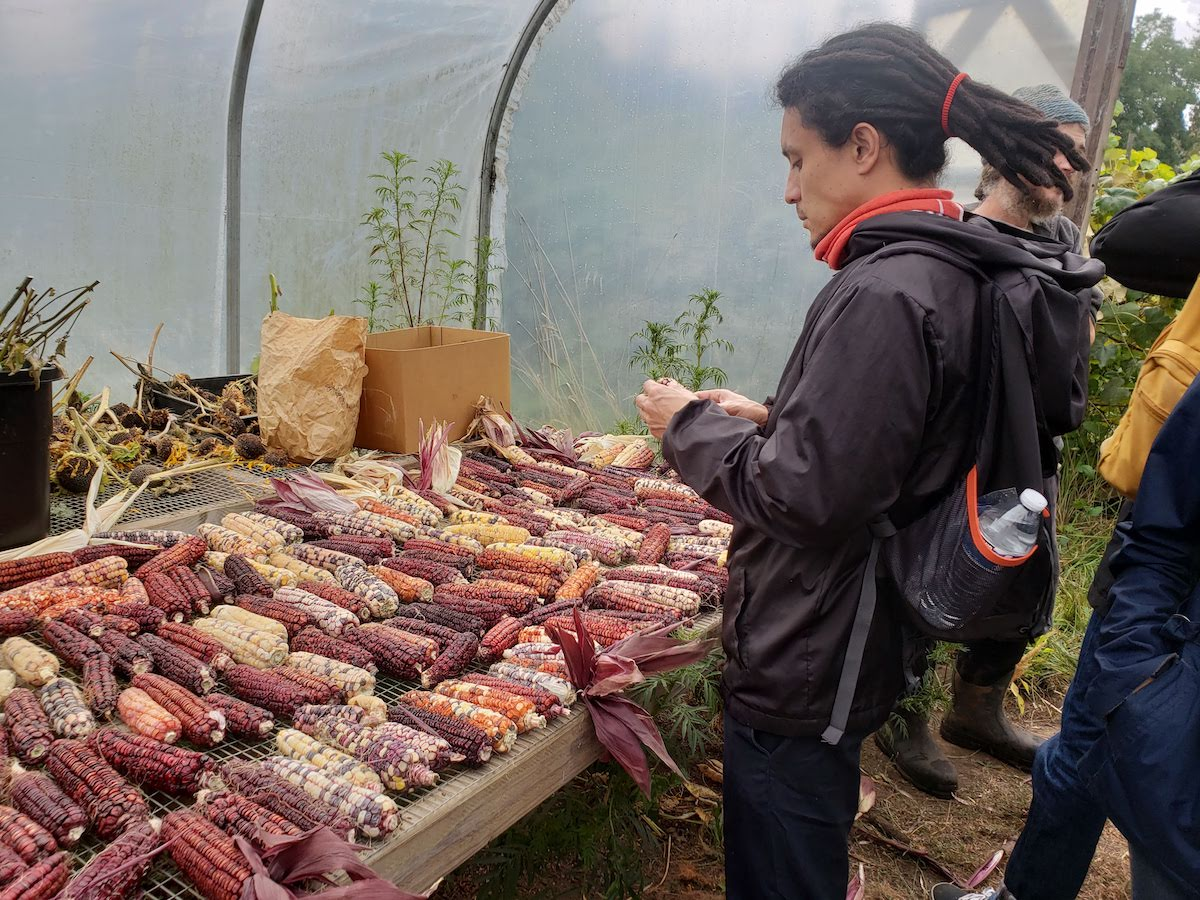 ILC Participant and Corn Varieties