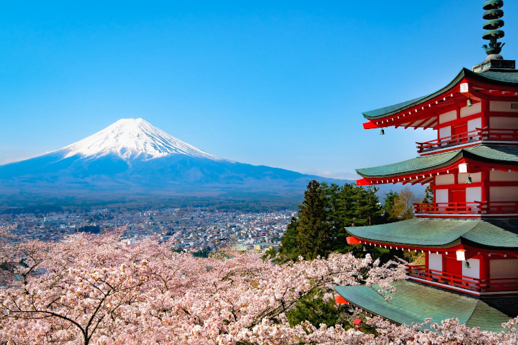 Photo of Mt. Fuji and Cherry Blossom Trees