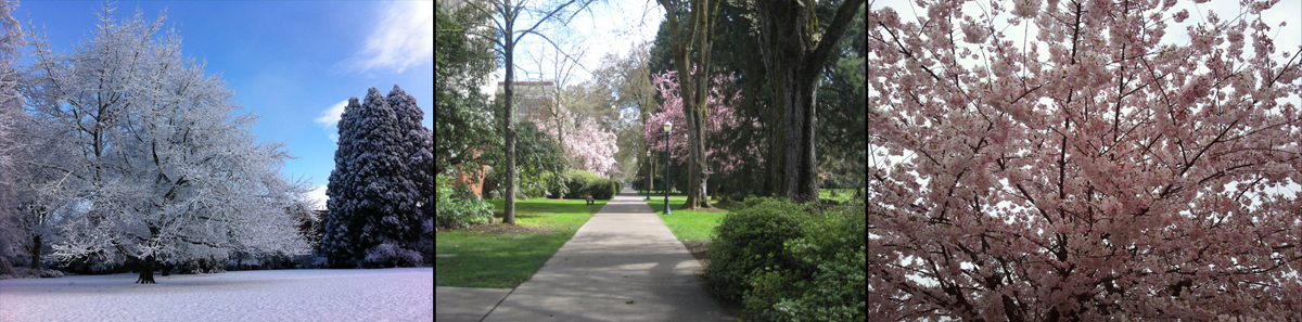 Images of trees in bloom